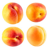 Apricot fruits isolated Royalty Free Stock Images