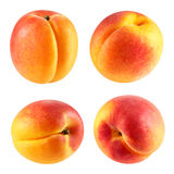 Apricot fruits isolated Royalty Free Stock Image