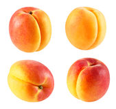 Apricot fruits isolated Stock Image