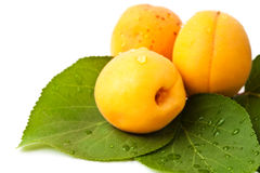 Apricot fruits with leaves isolated on white Royalty Free Stock Image