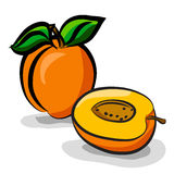 Apricot fruits sketch drawing  set Royalty Free Stock Images