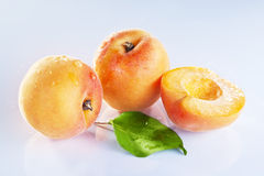 Apricot fruits. With on white background royalty free stock photo