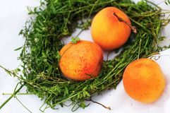 Apricot in grass wreath Stock Photos