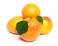 Apricot with green leaf Royalty Free Stock Photography