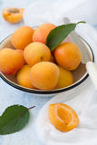 Apricot. Group of ripe juicy fruit apricot on a white bowl Royalty Free Stock Images