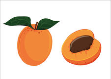 Apricot illustrated Royalty Free Stock Image