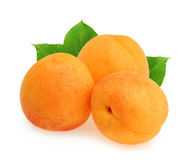 Apricot isolated on white background Royalty Free Stock Photo