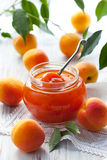Apricot jam. In jar and fresh fruits with leaves Stock Images