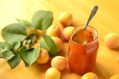 Apricot jam and fresh apricots Stock Image