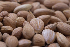 Apricot Kernel Royalty Free Stock Image