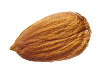 Apricot kernel. Isolated on white background royalty free stock images