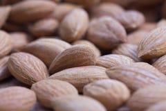 Apricot kernel, extreme closeup Stock Image
