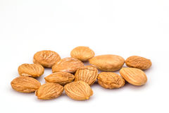 Apricot kernel Stock Images