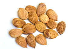 Apricot kernel. On a white background stock images