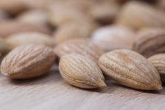 Apricot kernel on wooden plate.Extreme close up royalty free stock photos