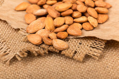 Apricot kernels Stock Photography