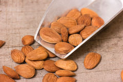 Apricot kernels Stock Images