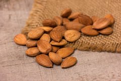 Apricot kernels Royalty Free Stock Image