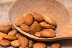 Apricot kernels Stock Images
