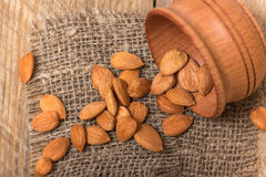 Apricot kernels Royalty Free Stock Photos