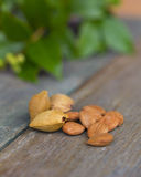 Apricot Kernels on wooden table with greenery and stone or pips Stock Photography