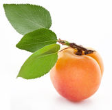 Apricot with leaf. royalty free stock image