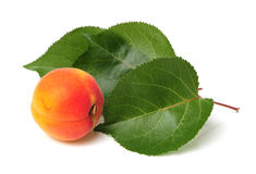 Apricot with leaf Stock Photos