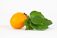 Apricot with Leafs Stock Photos