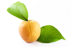 Apricot with leafs Stock Photo