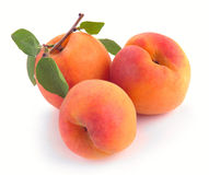 Apricot with leaves Royalty Free Stock Photos