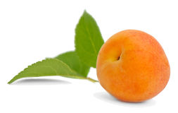 Apricot with leaves Royalty Free Stock Image