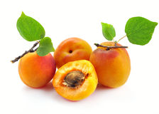 Apricot with leaves Stock Image