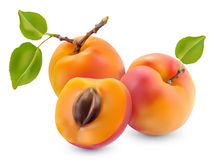 Apricot with leaves stock illustration