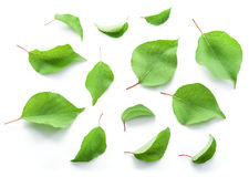 Apricot leaves. Stock Images