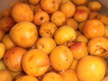 Apricot. Orange juicy Royalty Free Stock Photo