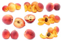 Apricot and peach stock image