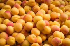 Apricot peaches - pile of fruits Stock Images