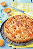 Apricot pie Stock Image
