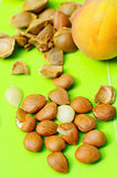 Apricot and pits stock image