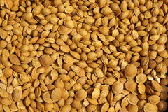 Apricot pits dried. The background of apricot pits Royalty Free Stock Photography