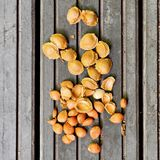 Apricot pits on wood. Apricot pits and kernels on a gray wooden background Stock Image