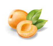 Apricot pitted with leaves Royalty Free Stock Photo