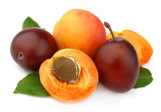 Apricot and plums Royalty Free Stock Images
