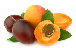 Apricot and plums Royalty Free Stock Photos