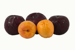 Apricot and Prune Stock Images