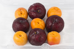 Apricot and Prune Royalty Free Stock Photography
