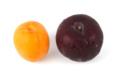 Apricot and Prune Royalty Free Stock Photos