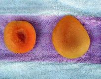 Apricot, Prunus armeniaca Royalty Free Stock Photography
