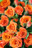 Apricot roses bouquet Royalty Free Stock Photography