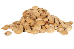 Apricot seeds stock image